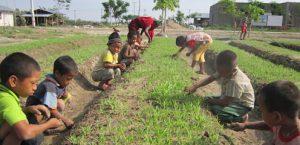 Gartenbauprogramme